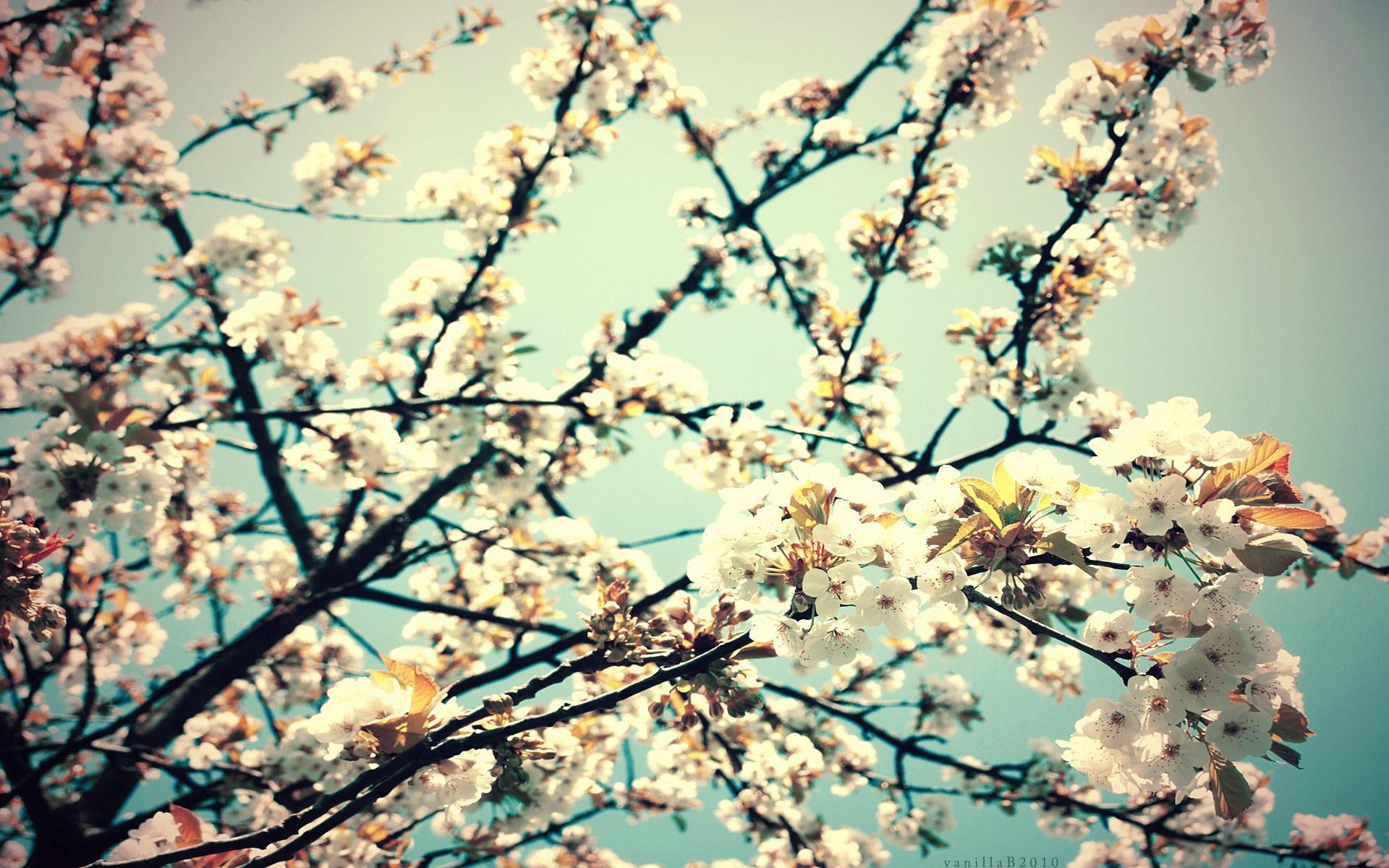 Flower Tumblr Wallpaper Desktop for Desktop Uncalke
