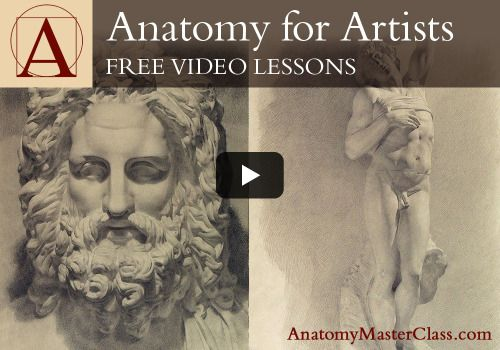 Anatomy Master Classes Free Online Videos Sponsoring Tutorial