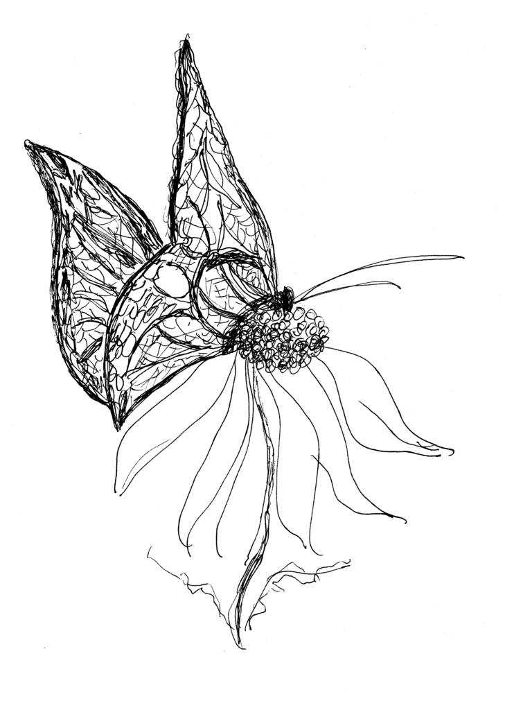 Butterflies On Flower Skectches | Butterflies And Flowers Drawings