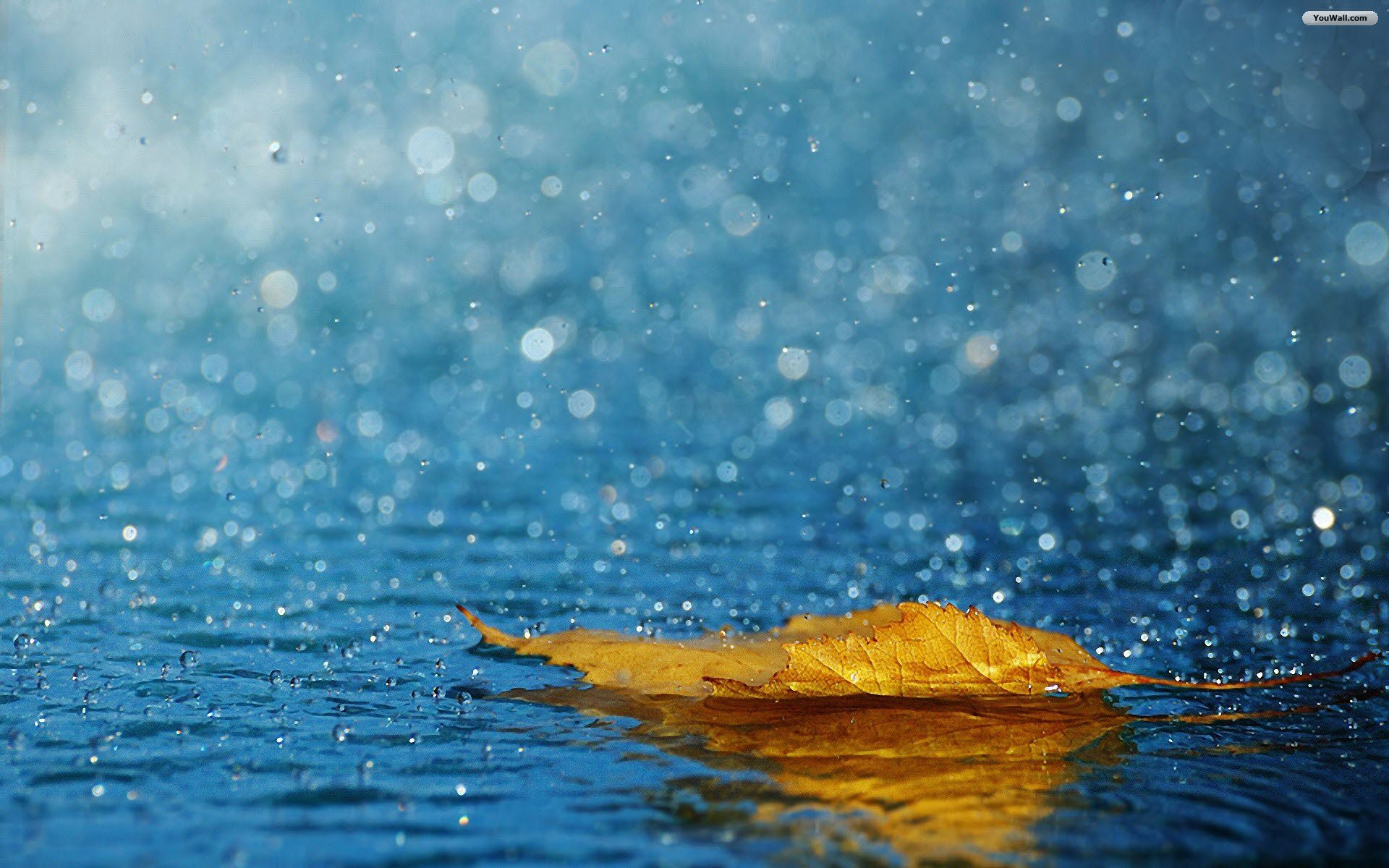 Leaf In The Rain Wallpaper Rain Wallpapers Nature Wallpaper Rain Quotes