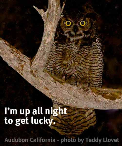 Because You Know He S Nocturnal Oh Nevermind Bird Owl Humor