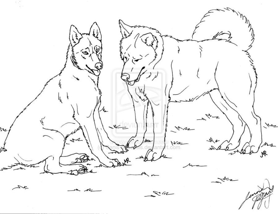 Realistic Wolf Coloring Pages Home Animals Realistic Animal Coloring Pages Together With Setup Dog Coloring Page Coloring Pages Puppy Coloring Pages
