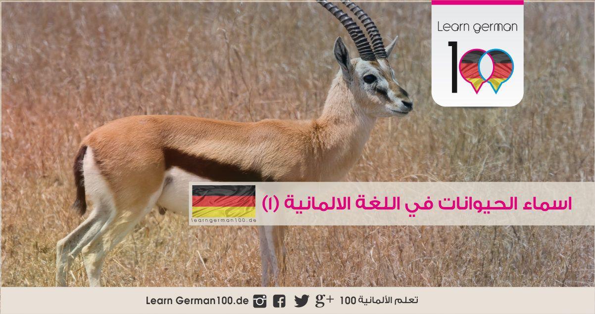 اسماء الحيوانات باللغة الالمانية مع النطق 1 2 Learning Animals Role