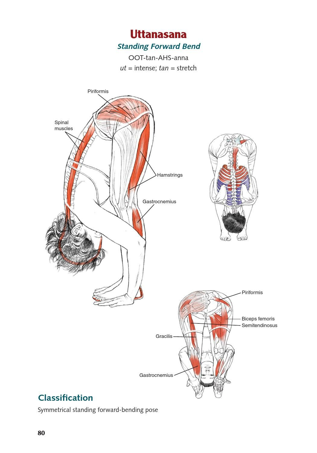 Yoga Anatomy extended ed. by Lesie Kaminoff by Seraph | Yoga anatomy ...