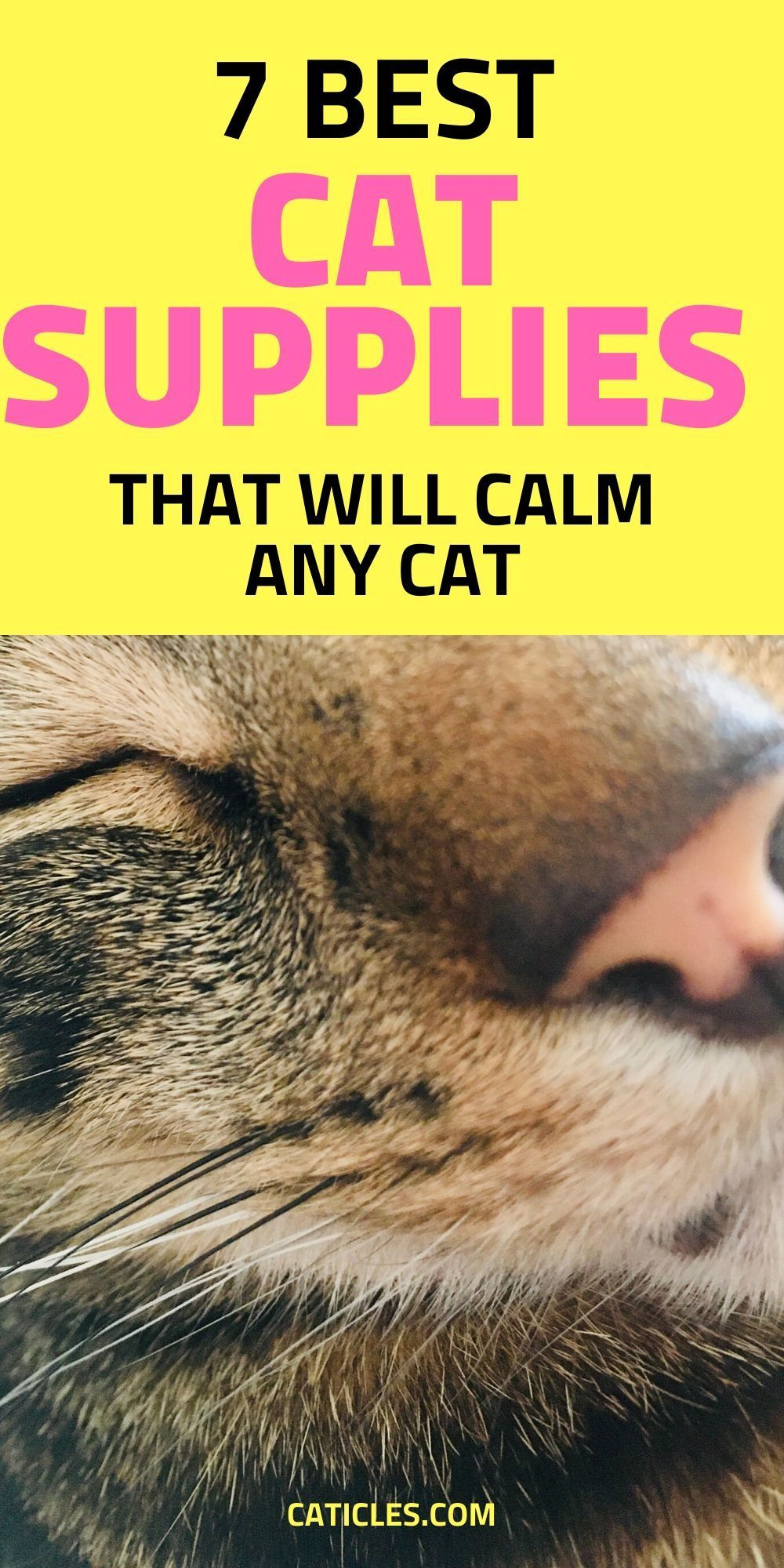 How To Calm Down A Scared Cat And Help The Cat Adjust Caticles In 2020 Calming Cat Cat Life Hacks Cat Essentials