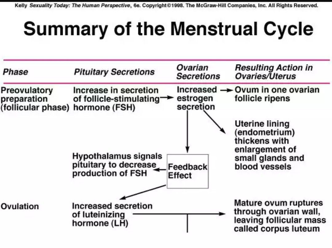 Importants Events During Menstrual Cycle
