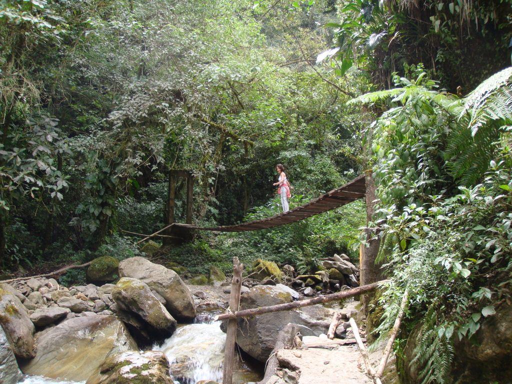 Vale de Cocora, CO 2012