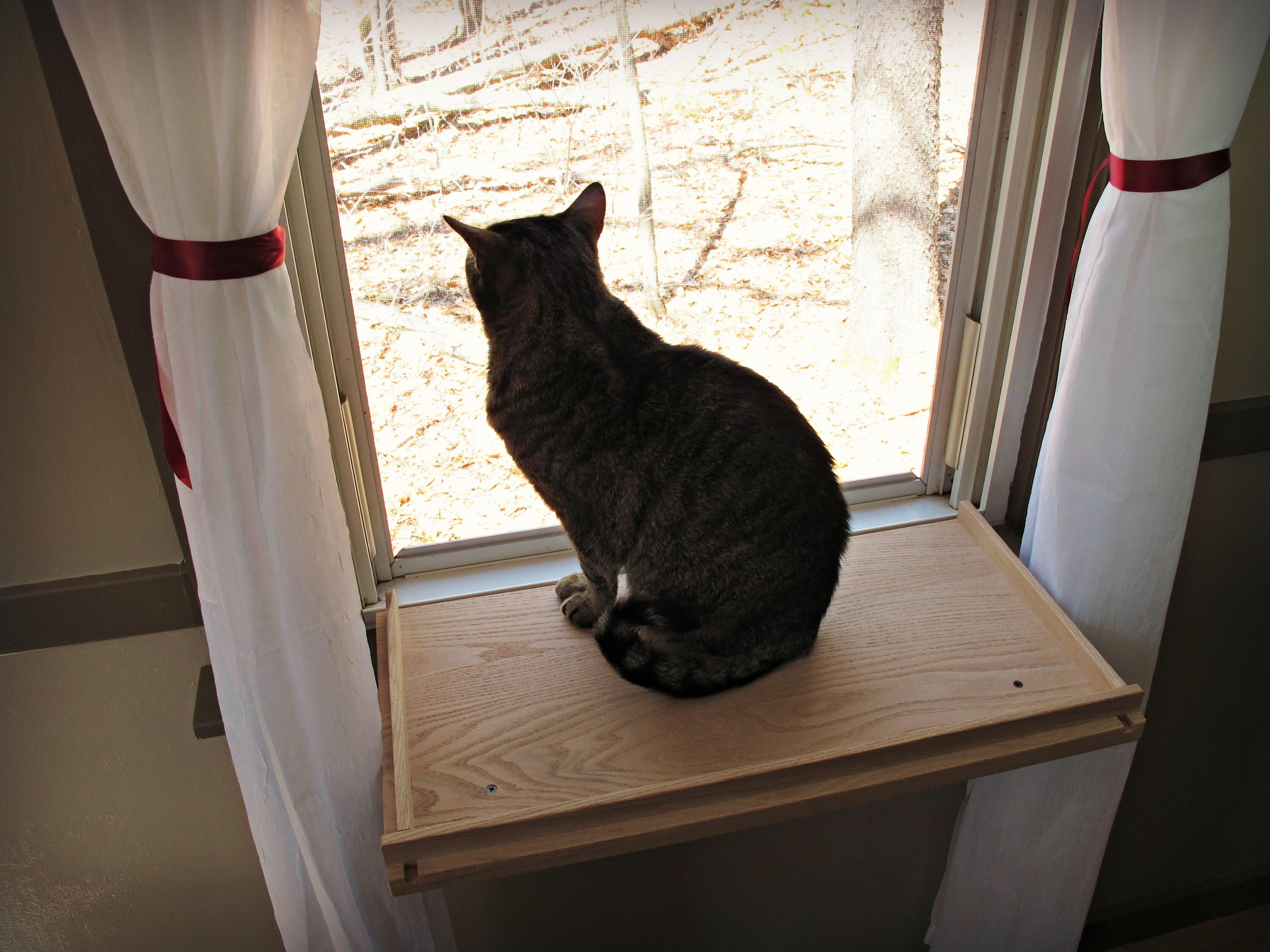 Cat Window Perch - Cat Shelf - Cat Bed by MountainPetProducts on Etsy https://www.etsy.com/listing/514362506/cat-window-perch-cat-shelf-cat-bed