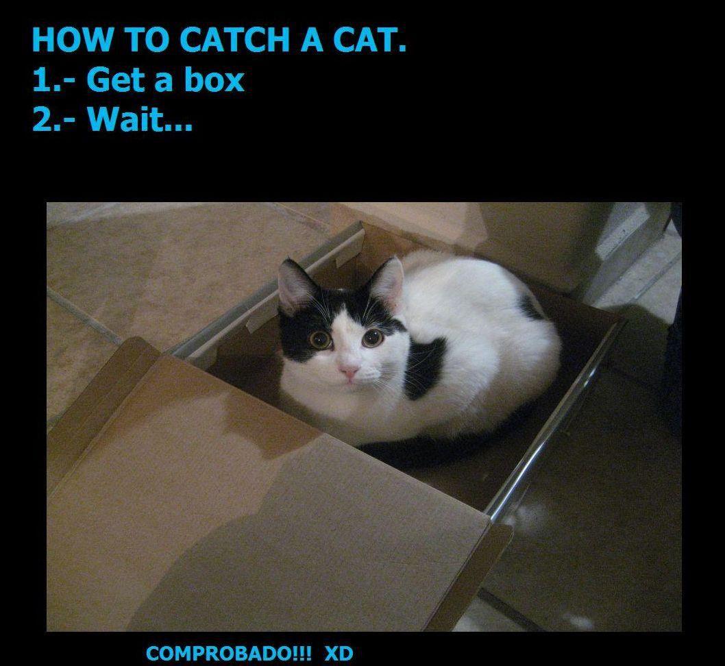 How to catch a cat Teora probada por mi Quesito