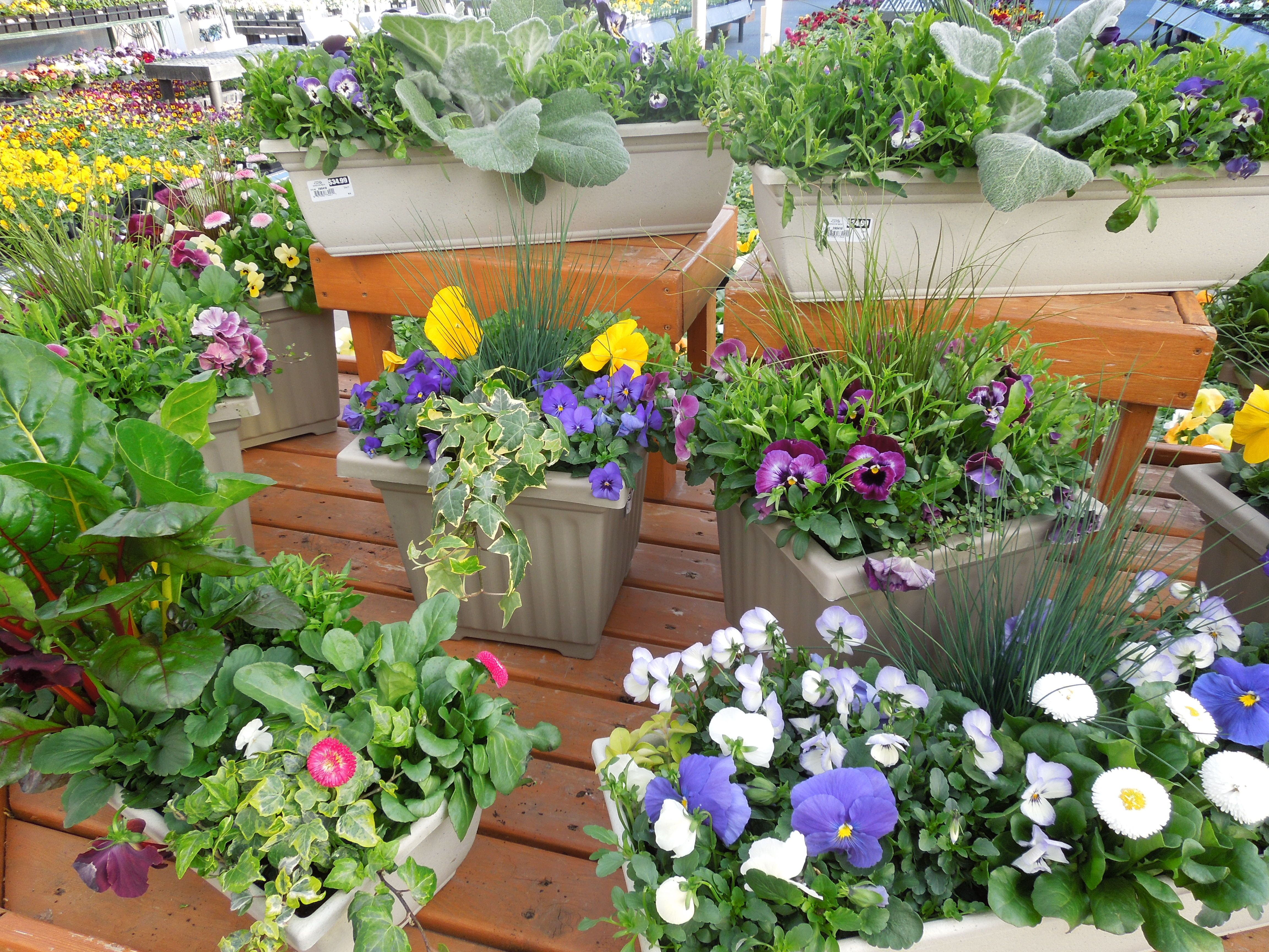 Visit your local garden store hill garden gardens and flower a few annual flower containers are bright and cheery for minimal expense izmirmasajfo Choice Image