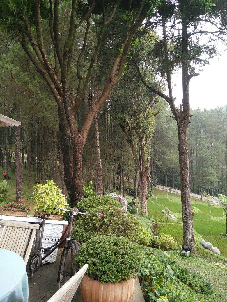 Saung Tales Terletak Dilereng Gunung Salak Dengan Pemandangan  # Muebles Pozo Ocana