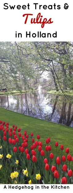 Visiting the tulips at Keukenhof outside of Amsterdam in Holland has been our bucketlist for a long time! We enjoyed some sweet treats too. | ahedgehoginthekitchen.com