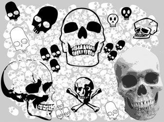 Cráneos de vectores