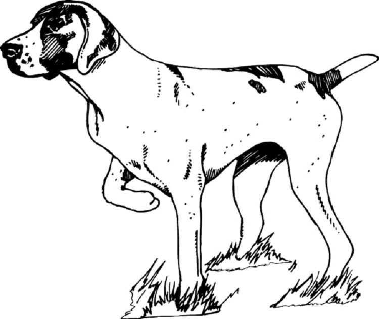 hunting dog coloring pages | Coloring Pages For Kids | Dog ...