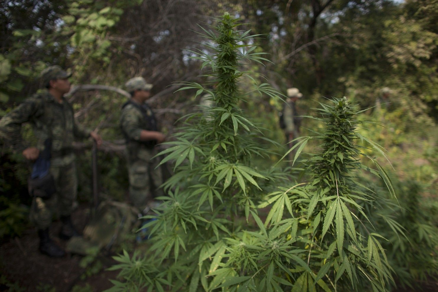 Legal marijuana is finally doing what the drug war couldn't - The Washington Post