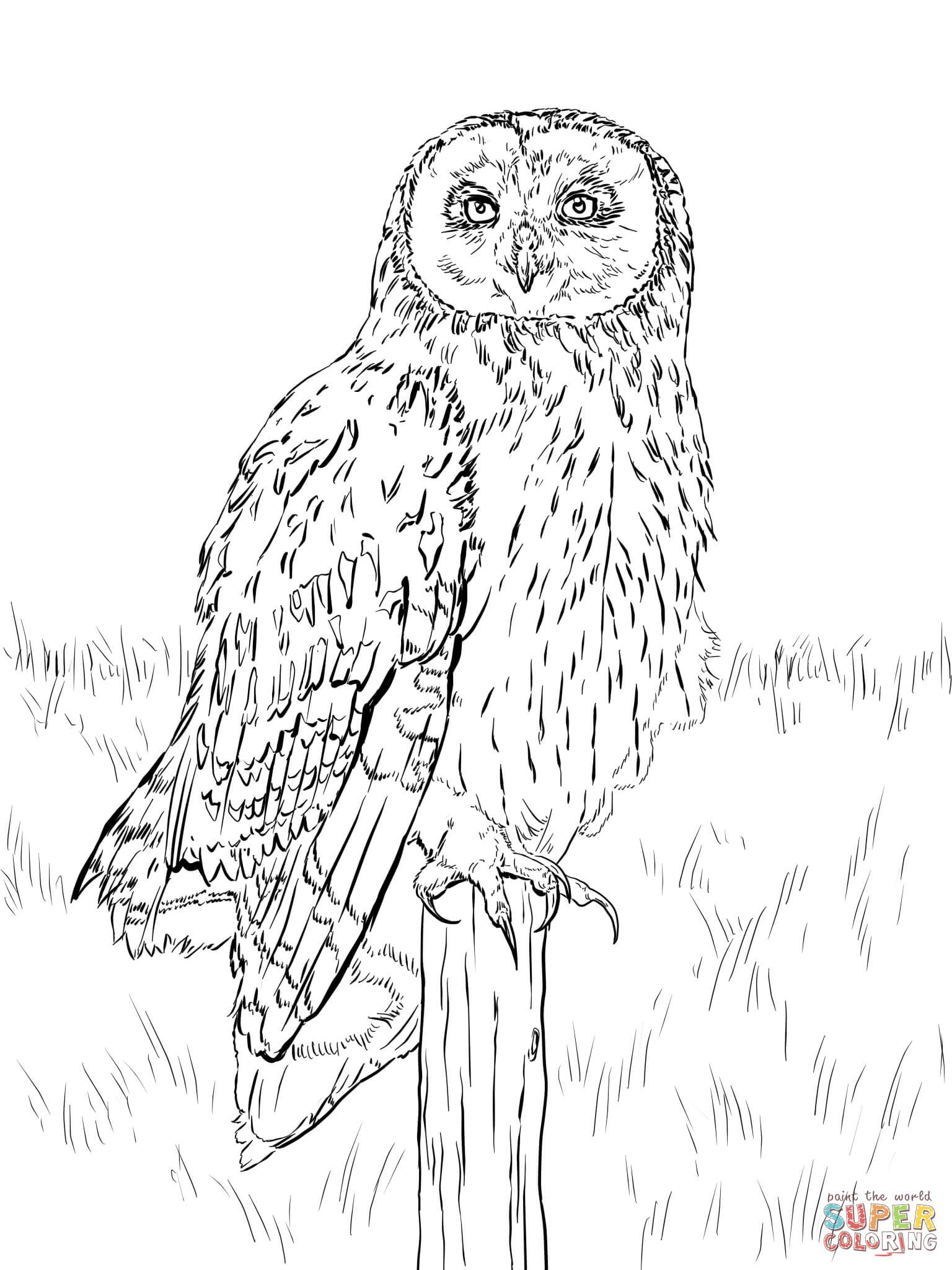 Pin by Małgorzata Kitka on Coloring pages - Owls | Pinterest | Short ...