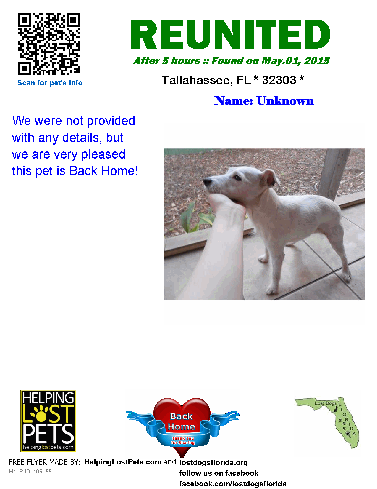 Helping Lost Pets Dog Jack Russell Terrier Reunited Jack
