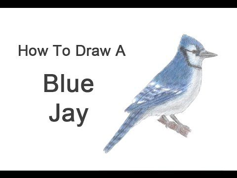 how to draw a bird youtube