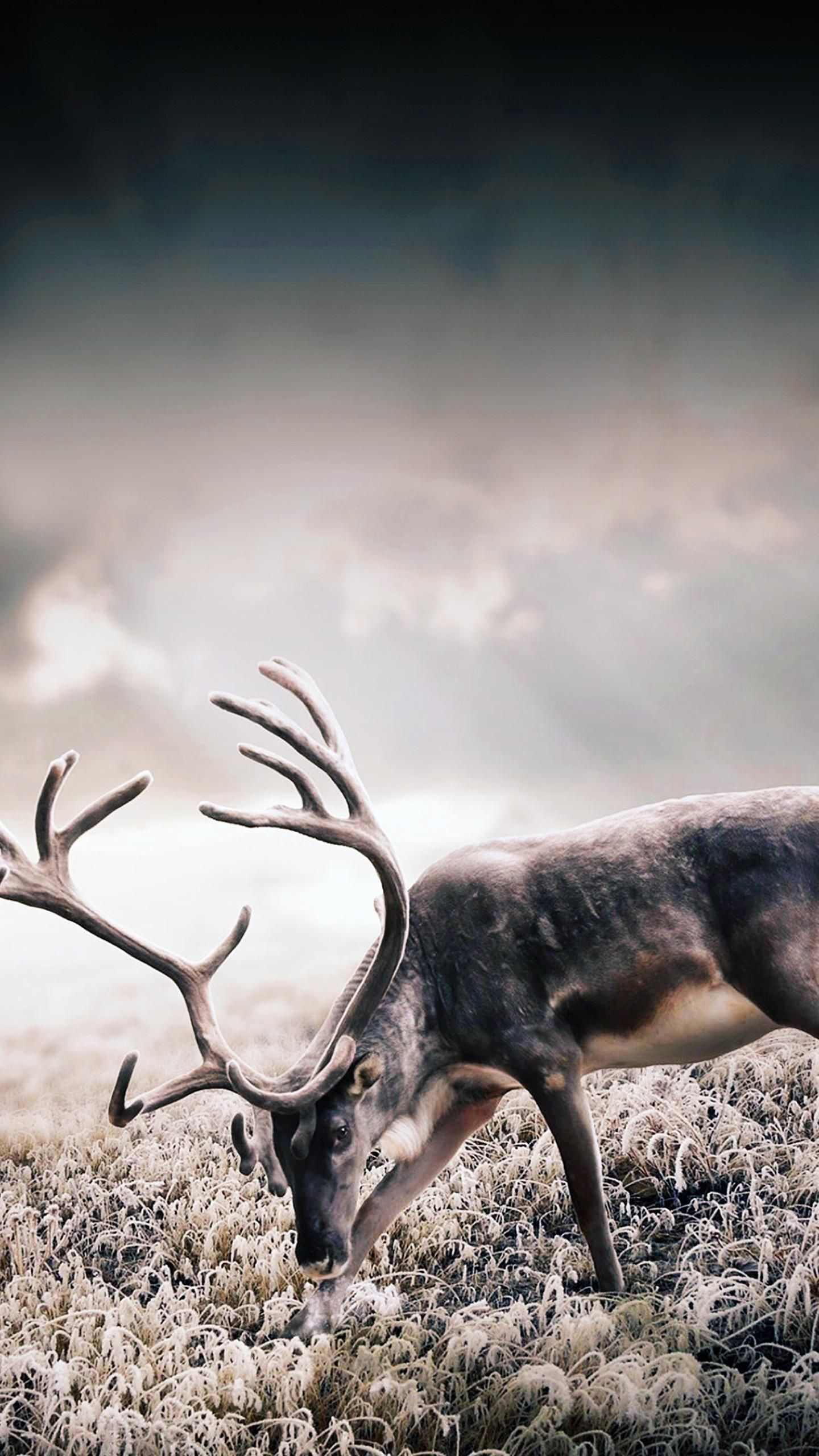 Wild Deer Galaxy S6 Wallpaper 1440x2560 Deer Wallpaper Wild Deer Animals