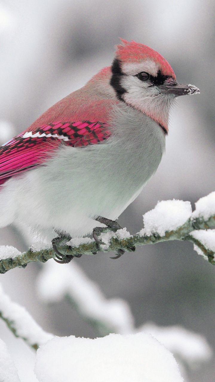 Скачать 720x1280 Птица, зима, снег, ветка, природа обои ...