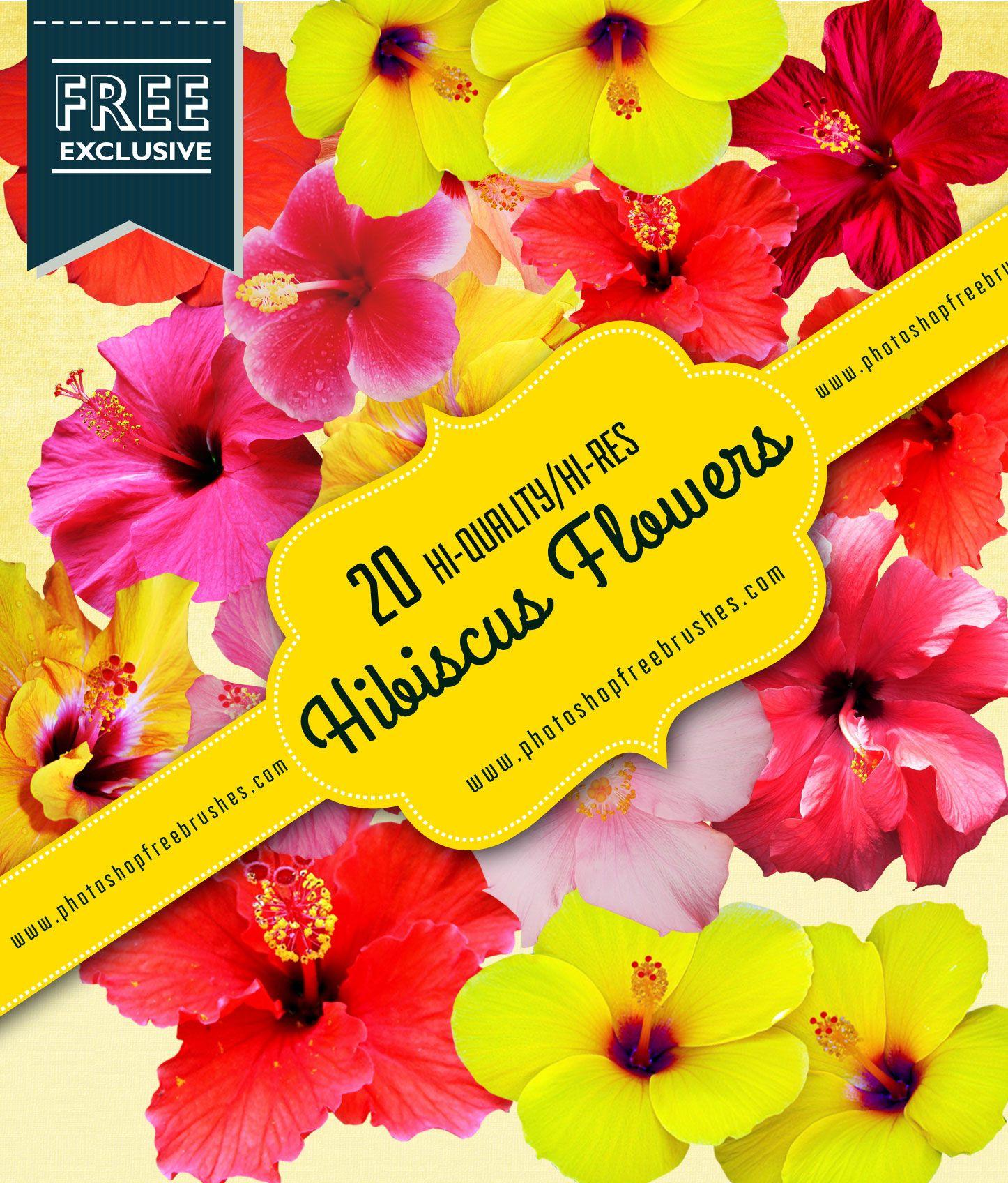 Hibiscus Flower Brushes Photoshop Brushes Free Flowers Hibiscus