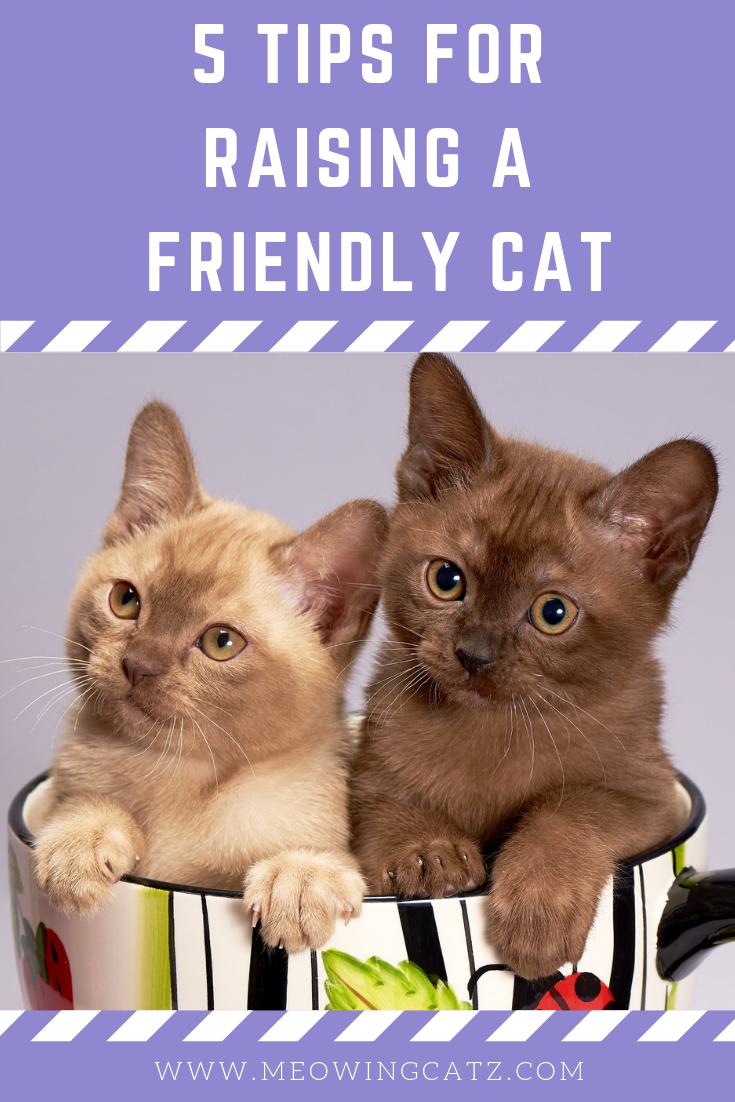 5 Tips For Raising A Friendly Cat How To Raise A Barn Cat How To Raise A Cat How To Raise A Nice Cat Rasing A Cat Ti Raising Kittens Cat