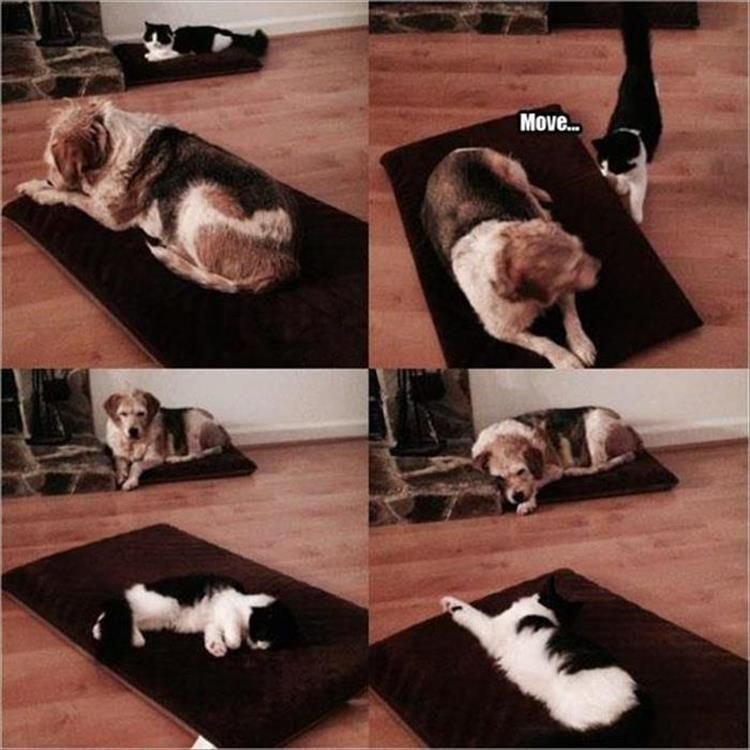 Dog Side Of The Bed Meme