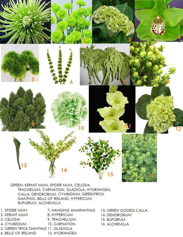Green wedding flowers - flower varieties - from Modern Petals blog ...