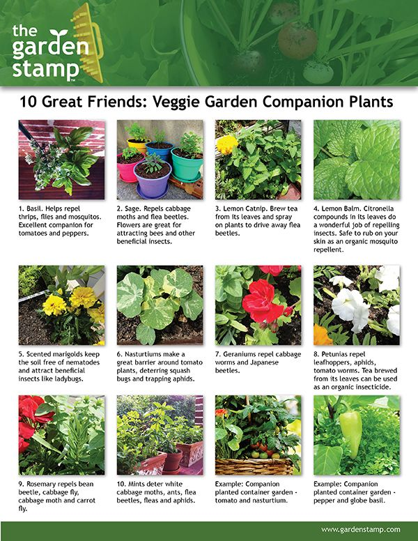 Ten Great Companion Plants Here Are Some Themes You Can Use To