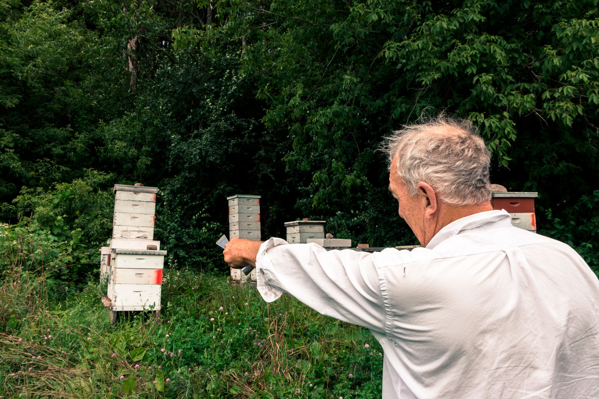 Southeastern Wisconsin beekeeping and honey. Local, organic apiaries and beekeeping. Maker of honey and related products. Serving WI and northern IL.