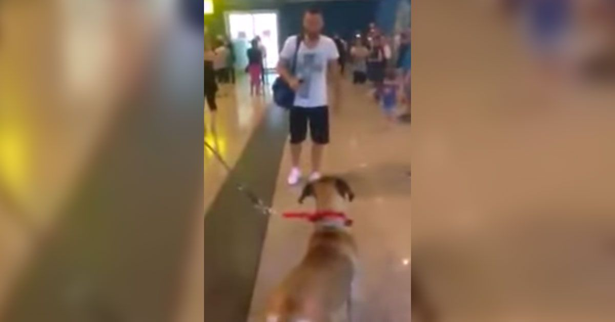 Dog stares at the owner he hasn't seen in 3 years. Now
