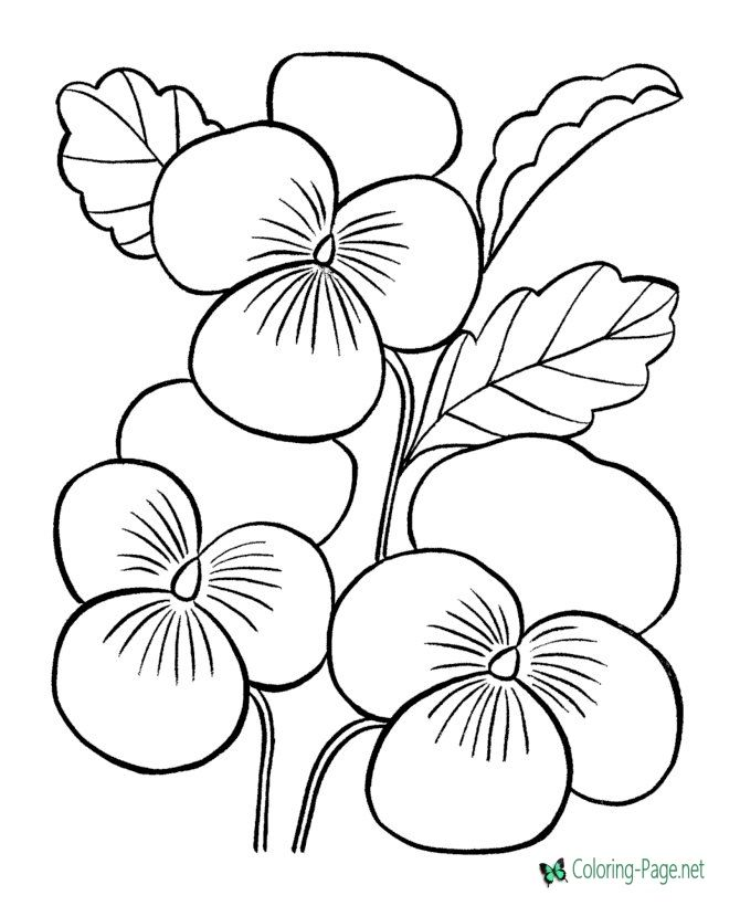 Flower Coloring Pages Flowers | Flowers | Pinterest | Flower colors ...