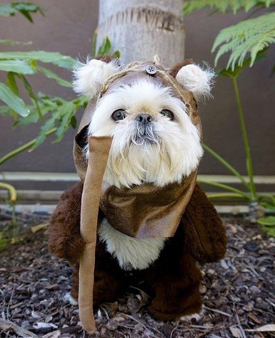Ewok Dog. Star Wars costume. @YoungDumbAndFun