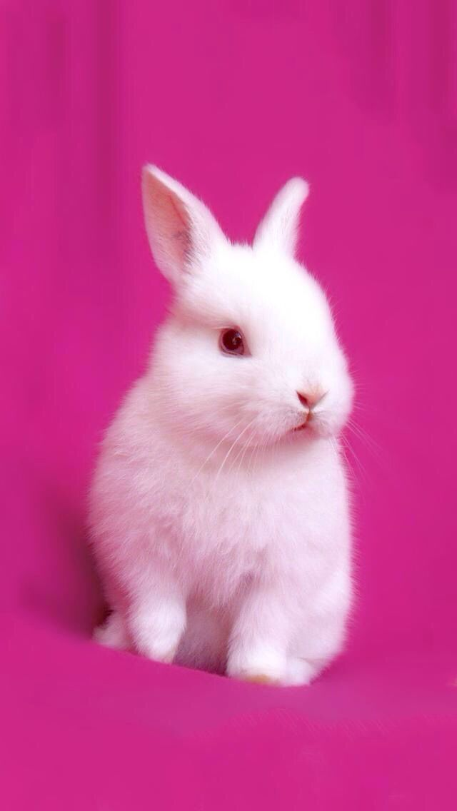 Bunny Iphone Wallpaper Cute Baby Bunnies Cute Animals Baby Bunnies