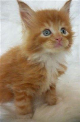 Pin On Kittens For E