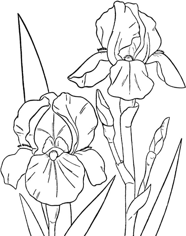 Spring Flowers Pictures Coloring Pages Flower Coloring Pages Lilies Drawing Drawings