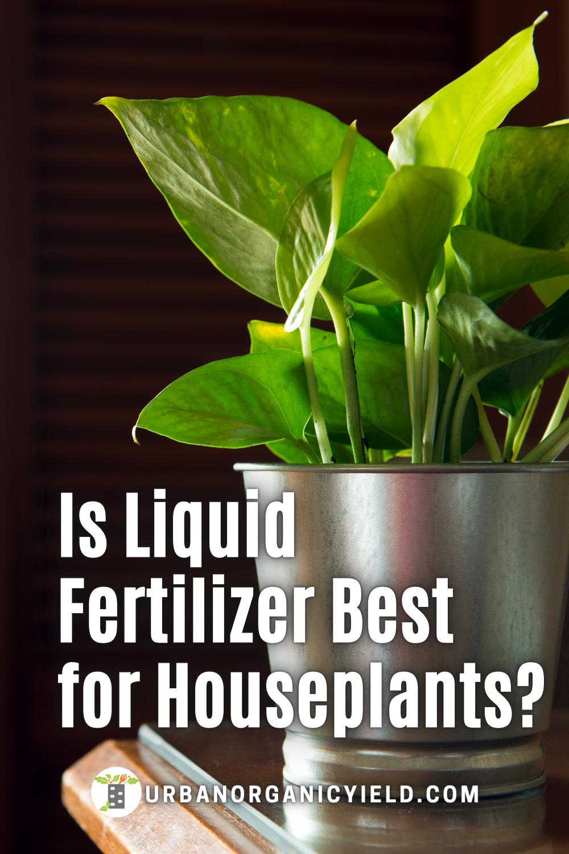 Fertilizer For Indoor Plants Houseplant In 2021 Fertilizer For Plants House Plants Plants