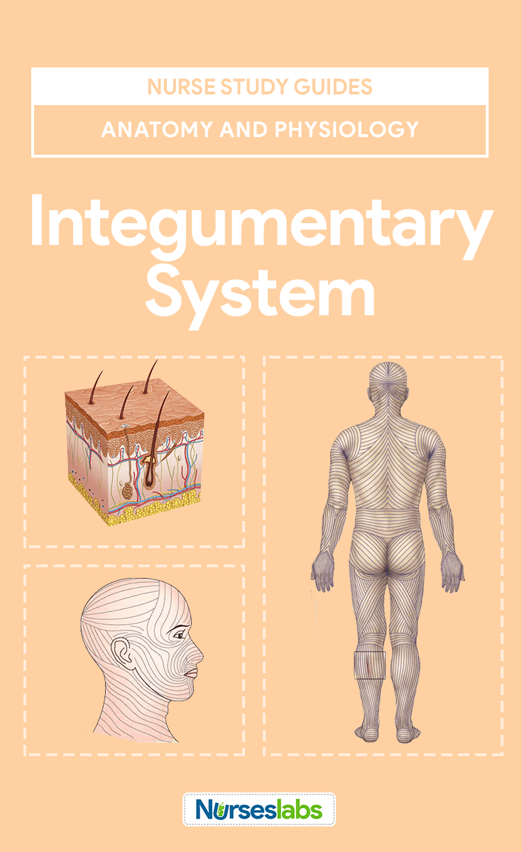 Integumentary System Anatomy and Physiology | Pinterest | Nursing ...