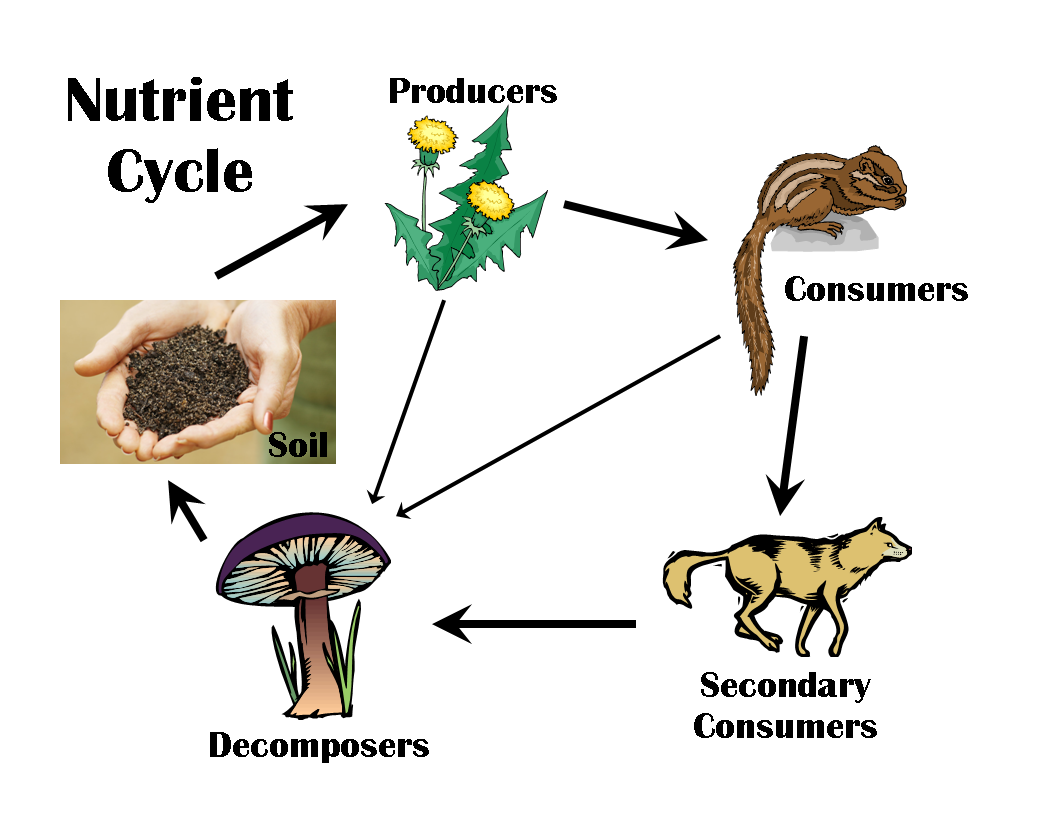 Nutrient cycles worksheet lesupercoin printables worksheets for Soil life cycle
