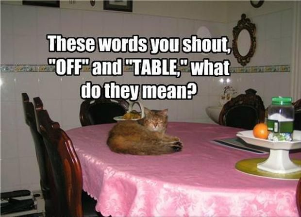 get off the table, funny cats