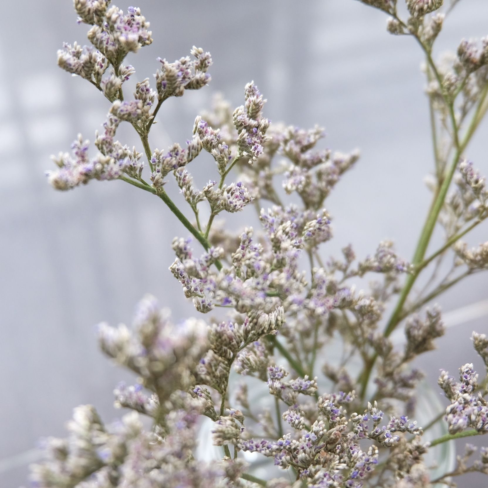 Caspia Flower Daun