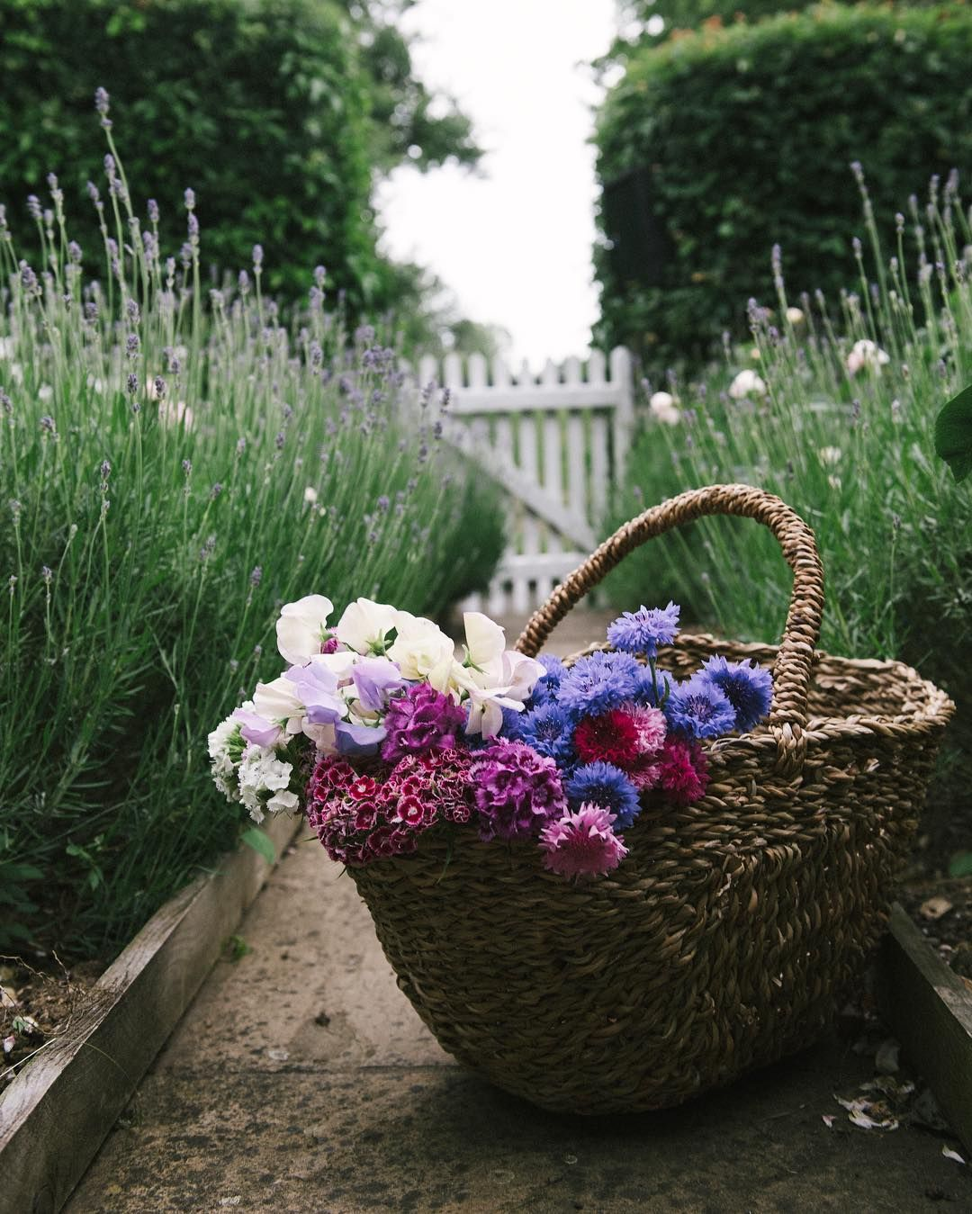 Basket full of flowers just_belle Daisy mae, Country