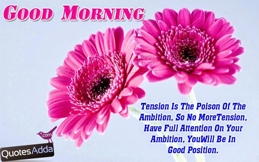 Nice Fresh Good Morning Quotes In English 1013 Quotesadda Com Inspiring Quotes All Festivals G Good Morning Quotes Good Morning Funny Good Morning Images