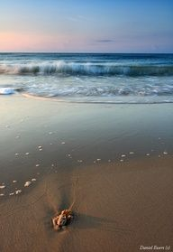 Best Vacation Destinations Enjoy Your Travels St George Island Florida Saint George Island Vacation Places
