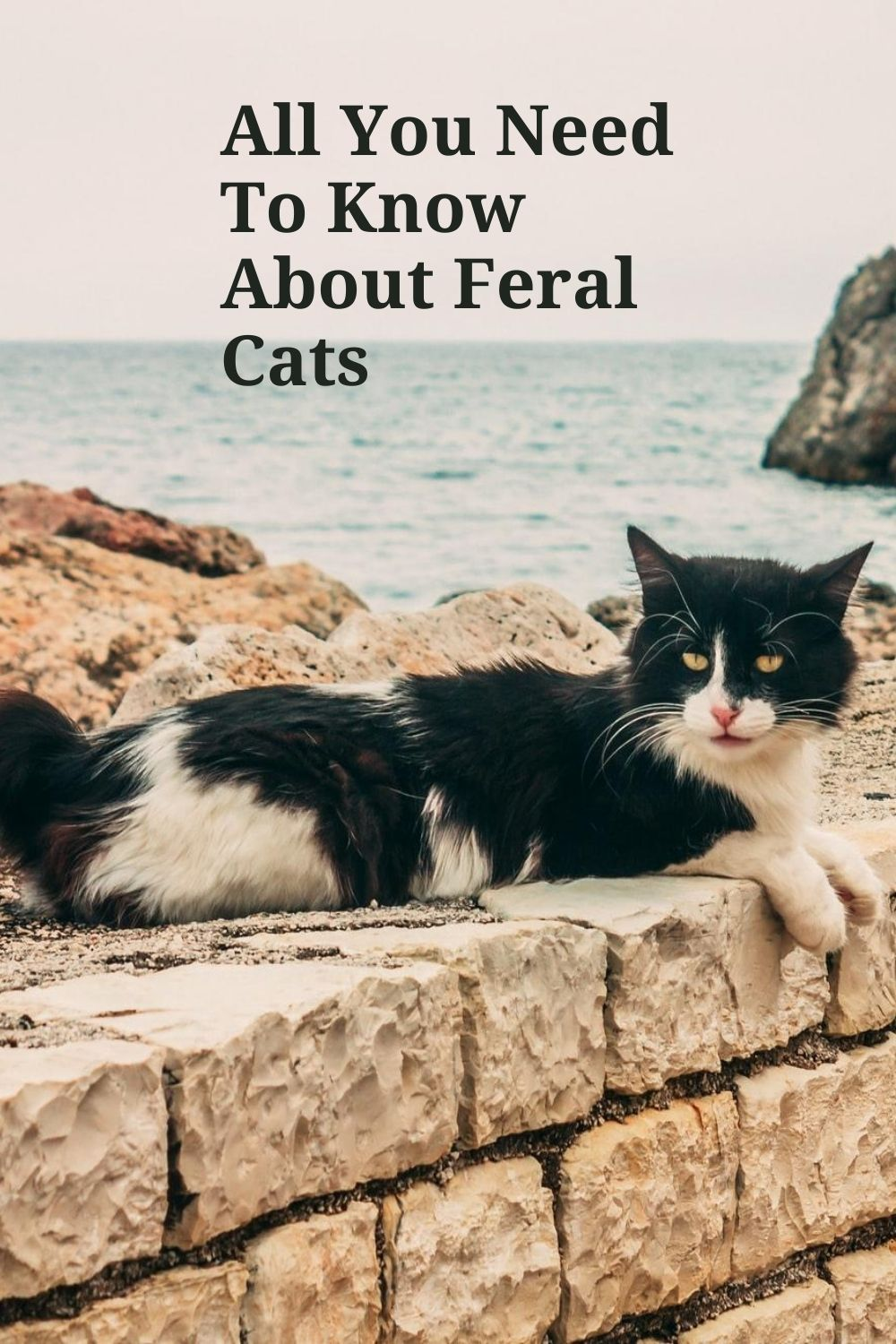 Feral Cats In 2020 Feral Cats Cats Pets