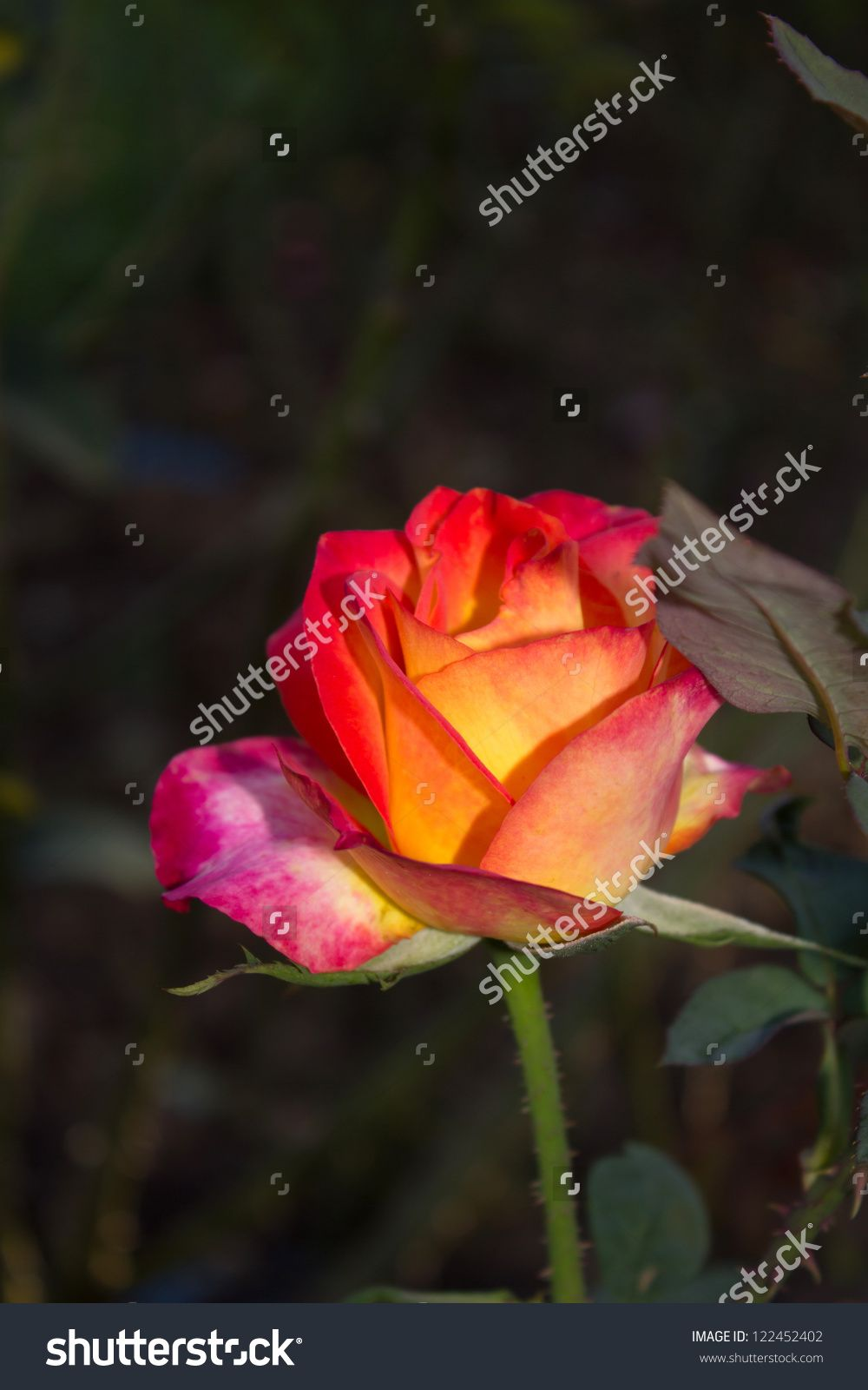 Background image src - Graden Rose On Tree Background Stock Photo From The Largest Library Of Royalty Free Images Only At Shutterstock