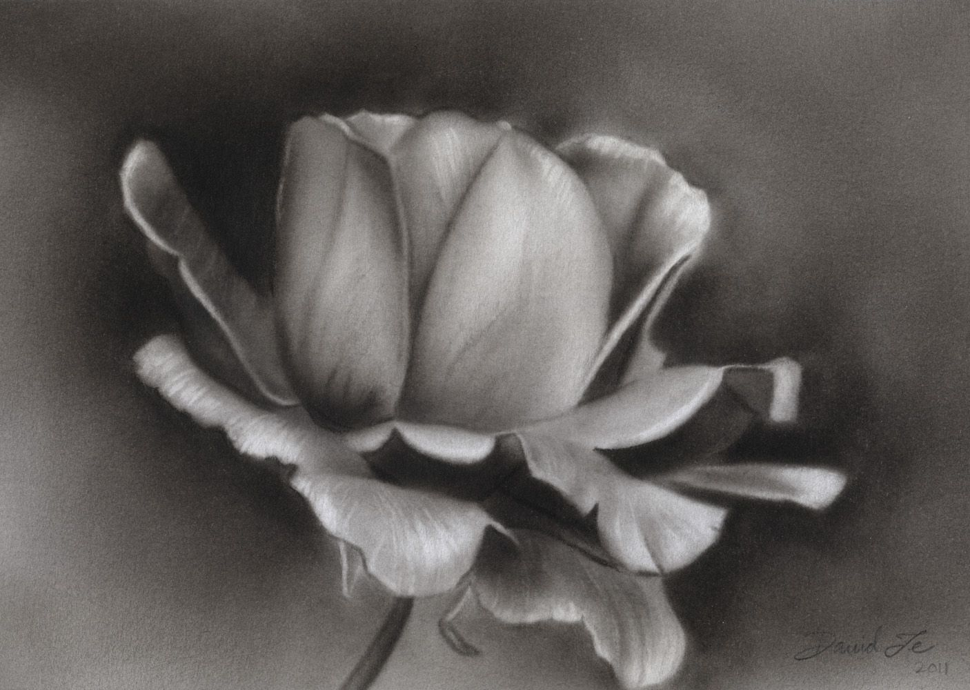 charcoal images sketches Charcoal Drawings of Roses http