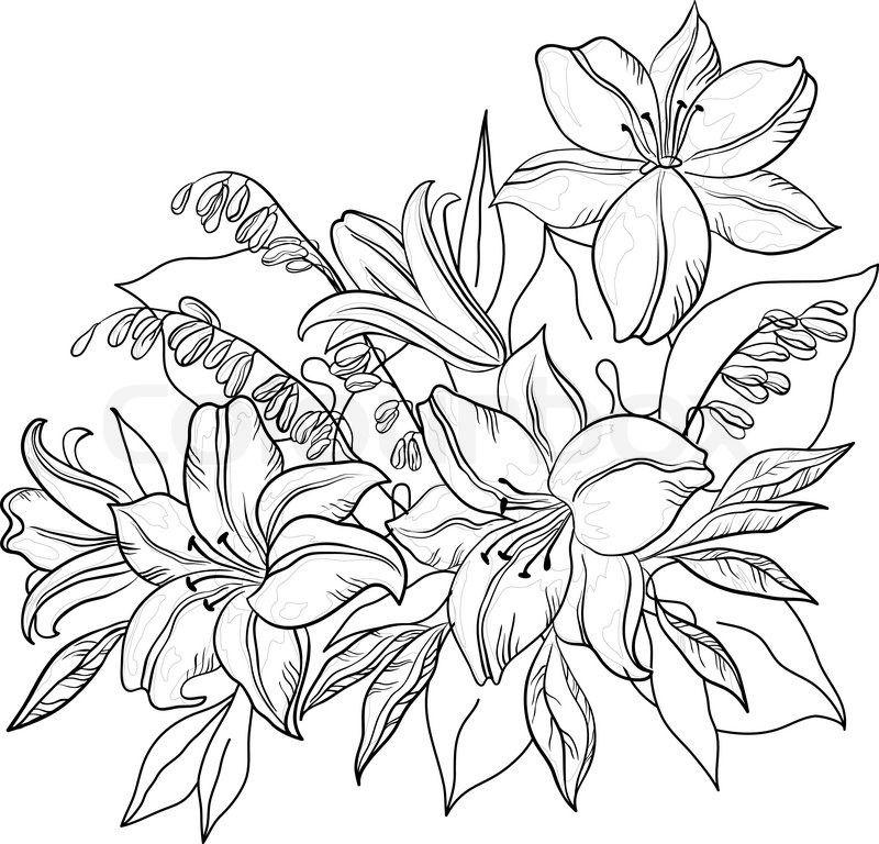 Blumen und Blätter Lilie und mine Vektor monochrome Konturen ...