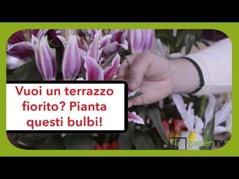 Quali bulbi scegliere, consigli per un terrazzo fiorito in