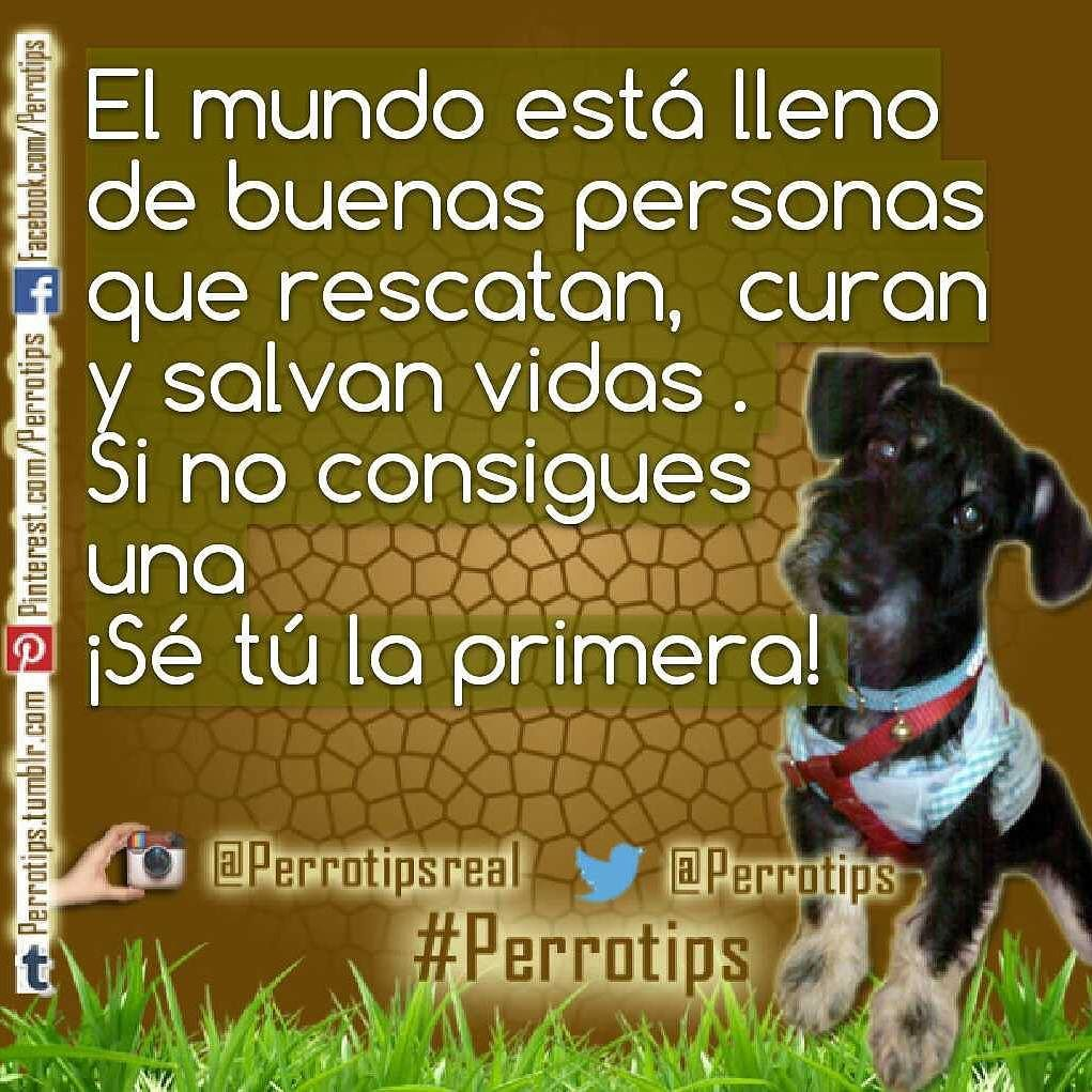 Atrévete a rescatar  curar  adoptar  amar  etc  #perrotips